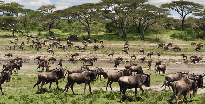 Where to Go in Africa in March - serengeti