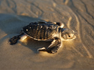 Where to Go in Africa in March - small turtle