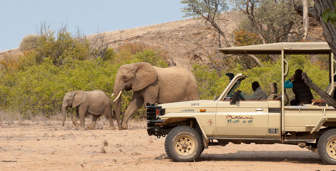 the Top 4 Natural Wonders of Secret Africa Elephants