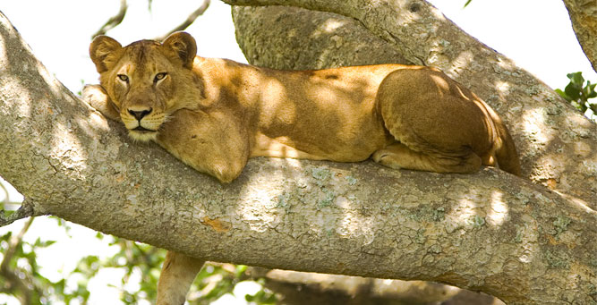 the Top 4 Natural Wonders of Secret Africa Lion