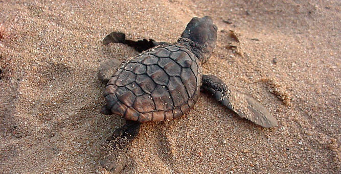 5 African Adventures to Have Before You Die Turtle