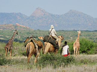 5 African Adventures to Have Before You Die Camels 2