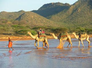5 African Adventures to Have Before You Die Camels 1