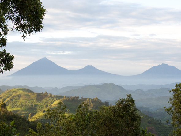 Gorilla, Culture & Wildlife Fly-in Safari - Virunga volcanoes