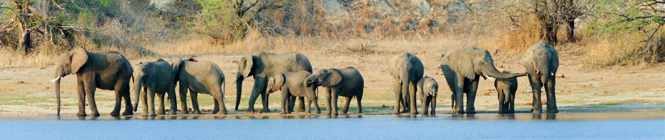 Decadent Safari & Seychelles Islands
