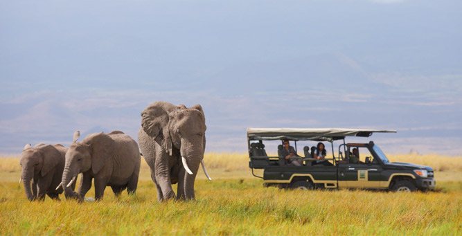 Where to Go in Africa to See Elephants - game drive
