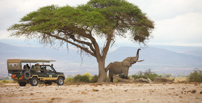 Where to Go in Africa to See Elephants - Amboseli