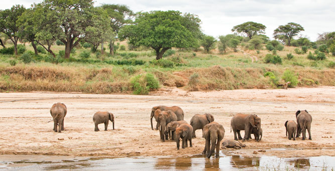 Where to Go in Africa to See Elephants - Tarangire