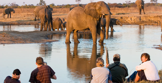 Where to Go in Africa to See Elephants - Zimbabwe