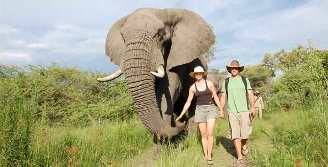 Where to Go in Africa to See Elephants - Okavango