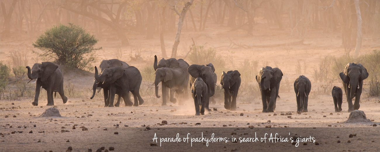 Where to Go in Africa to See Elephants - Banner