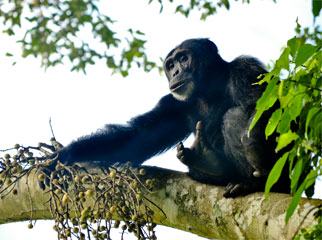 Where to go in Africa to see gorillas - blog5