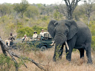 How to Combine South Africa's Favourite Destinations Kruger 1