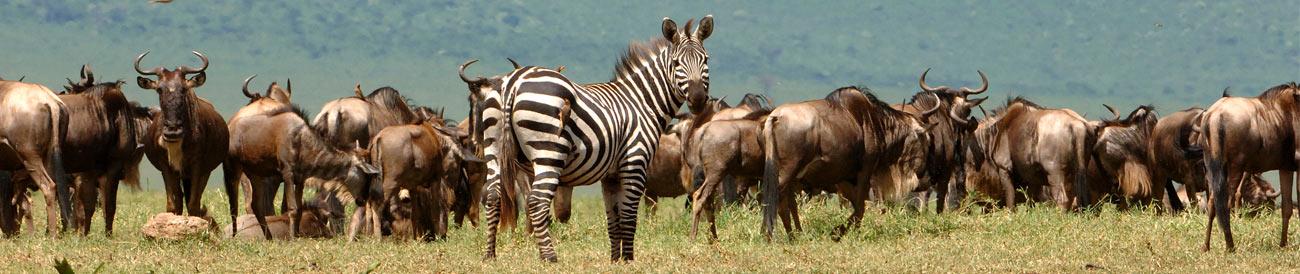 Ulitmate Mara, Vic Falls & Cape Explorer