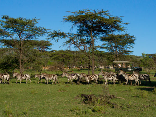 Klein's Camp - Serengeti migration