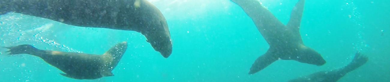 2971 - Experience Cape Ocean Adventures