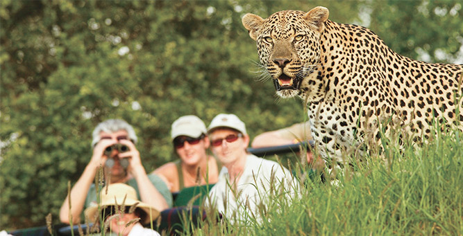 Where to Go in Africa to see Leopards - Londolozi