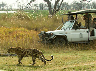 Where to Go in Africa to see Leopards - Bots small 2