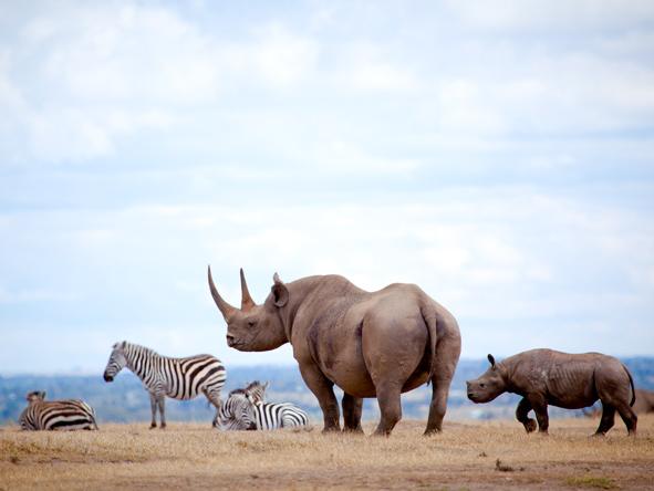 Solio Lodge - Rhino-breeding reserve