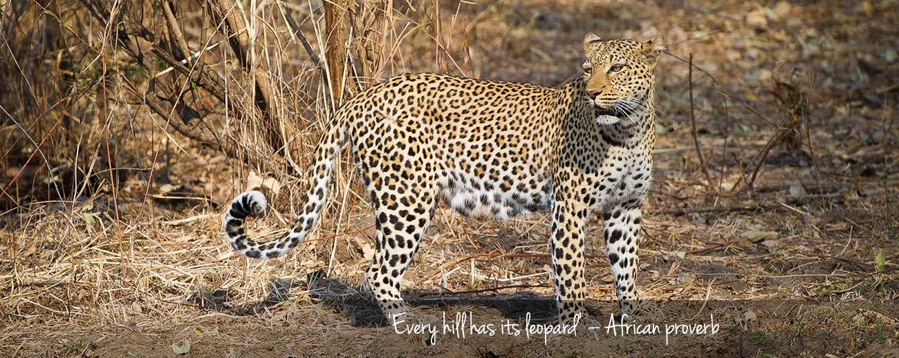 Where to Go in Africa to see Leopards - Blog Banner 2
