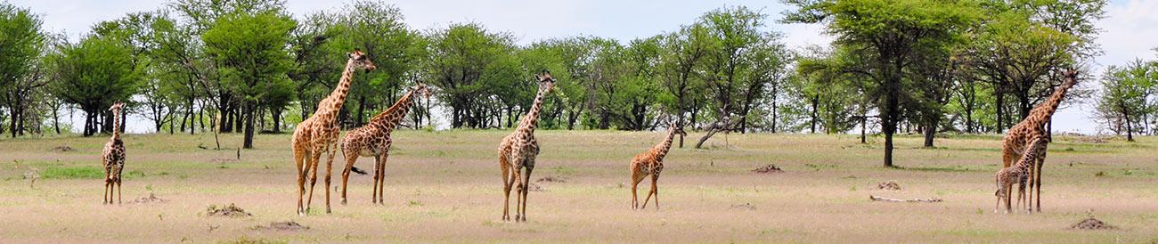 Scenic Tanzania Sky Safari
