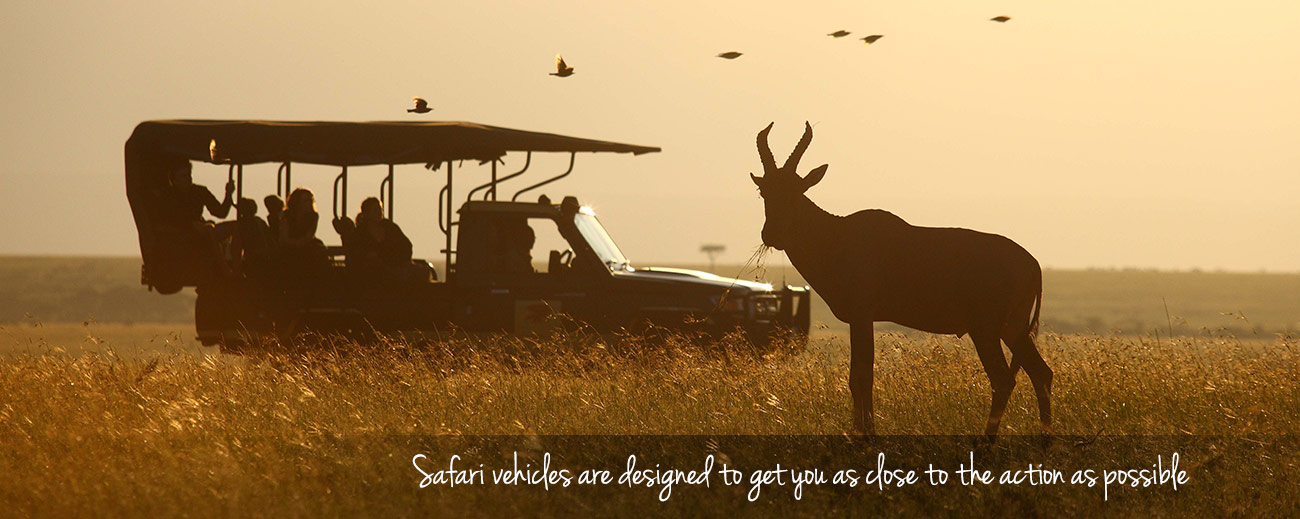 Safari vehicle blog cover