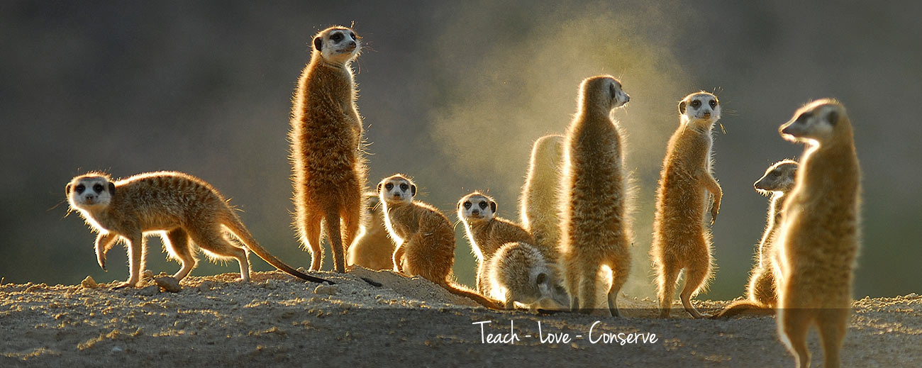 5 Bucket List Animal Encounters for Families Banner