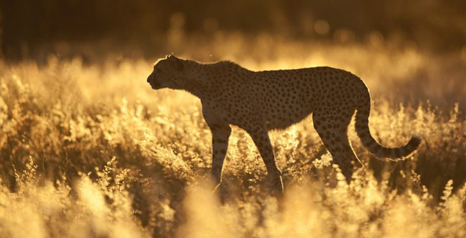 5 Bucket List Animal Encounters for Families Africats