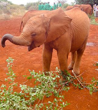 5 Bucket List Animal Encounters for Families Ellies 1
