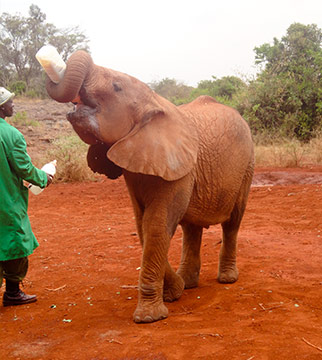 5 Bucket List Animal Encounters for Families Ellies 2