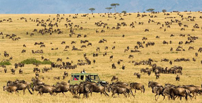 Top 5 African Bucket List Experiences for Solo Travellers Tanzania Migration