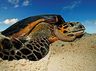 The 4 Best African Island Vacation Experiences Turtle 1