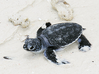 The 4 Best African Island Vacation Experiences - Little turtle