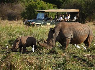 Where to Go in Africa in June - Mara 2