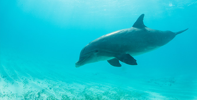 The Ultimate African Water Sports Bucket list Dolphins 2