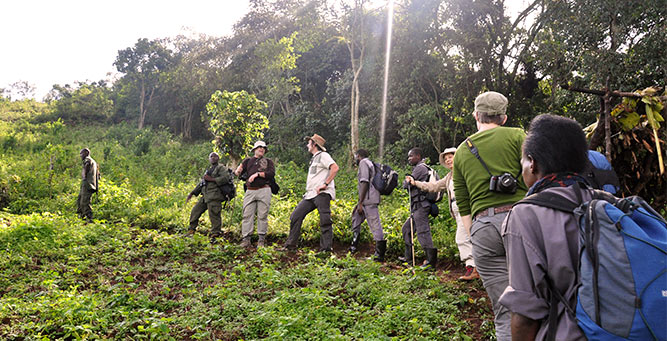 Where to Go in Africa in June - Gorilla 2