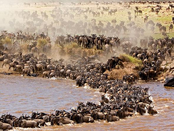 East Africa Family Safari
