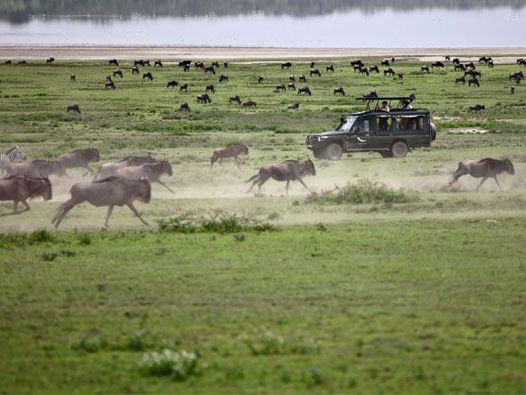 East Africa Family Safari & Beach
