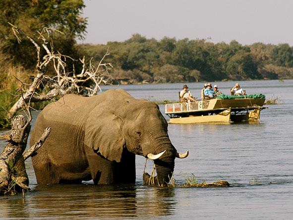 Spectacular Zambian Safari
