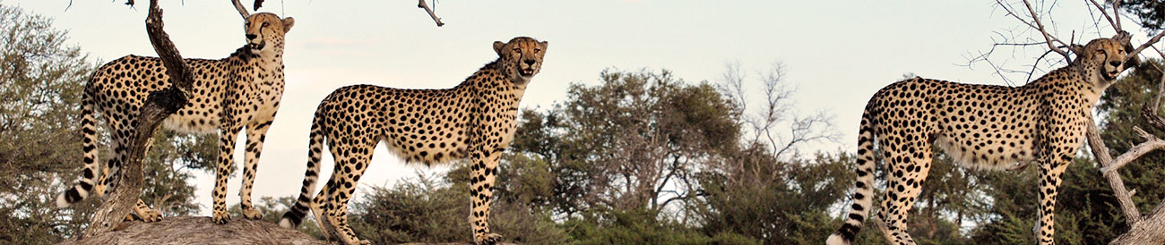 Best African Adventure
