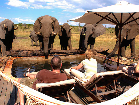 All Zimbabwe Safari