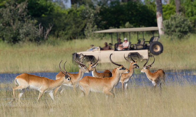 Where to Go in Africa in July - Okavango 2