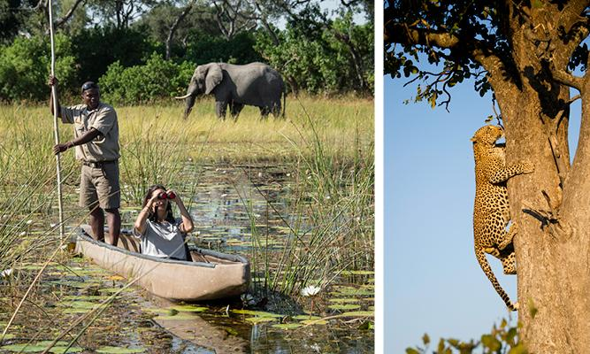 Where to Go in Africa in July - Okavango