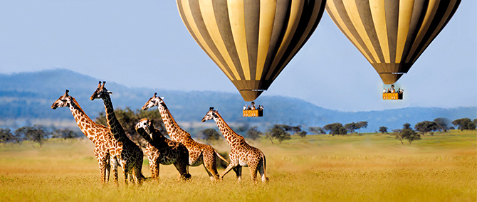 Balloon Safari Experience Block