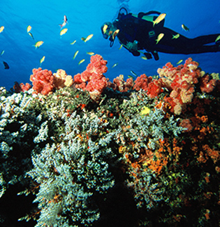 Diving Holiday Experience