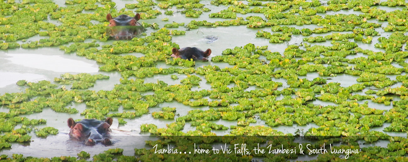 Our Recent Travels: Discovering Zambia Banner