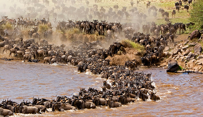 What You Didn't Know about the Great Migration 7