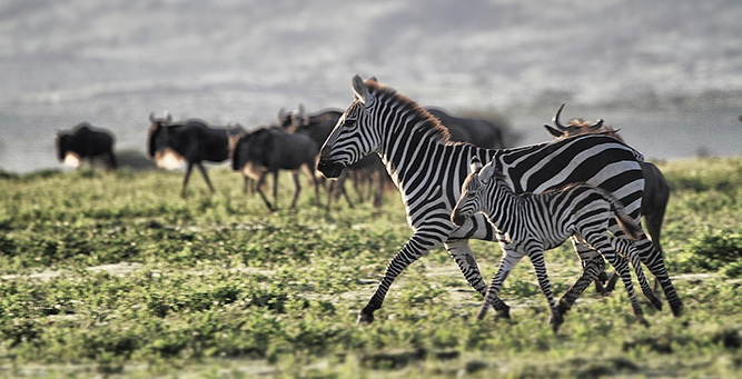 What You Didn't Know about the Great Migration 11