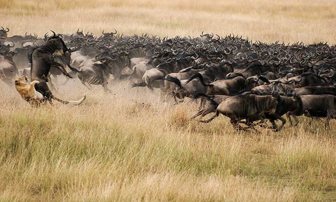 What You Didn't Know about the Great Migration 12
