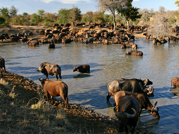 Ultimate Kruger & Mauritius Family Adventure